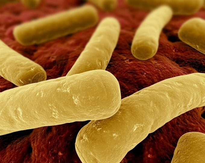 Инфекция Clostridium difficile у взрослых